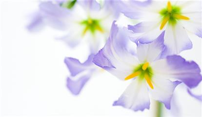 1328232 white background flowers